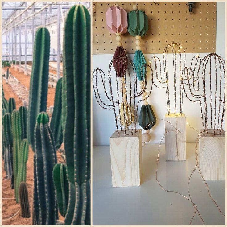 """1 mentions J'aime, 1 commentaires - 1, 2, 3 p'tits pois (@123ptitspois) sur Instagram: """"Je vais bientôt ouvrir une #cactuseraie ... 😂 #🌵 #cactusclub #cactus🌵 #cactuslover #cactusworld #💚"""""""