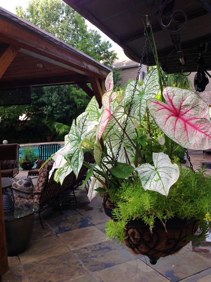 Hanging Basket Flowers Part Shade : Best images about gardening on gardens