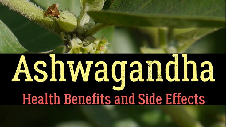 Ashwagandha – Health Benefits and Side Effects