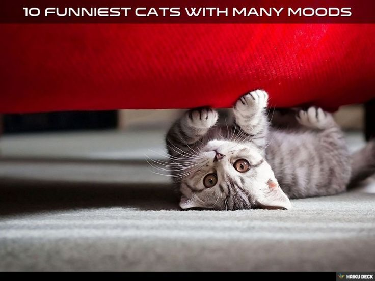 Watch 10 Funniest #Cats with Many Moods by our presentation