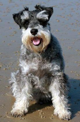 A pocos días de disfrutar de unos días de asueto, vamos a presentar alternativas de costa que nos ofreceesta comunidad. Nombramos 3 playas amigables para ir con nuestro perro: ALICANTE- La Playa…