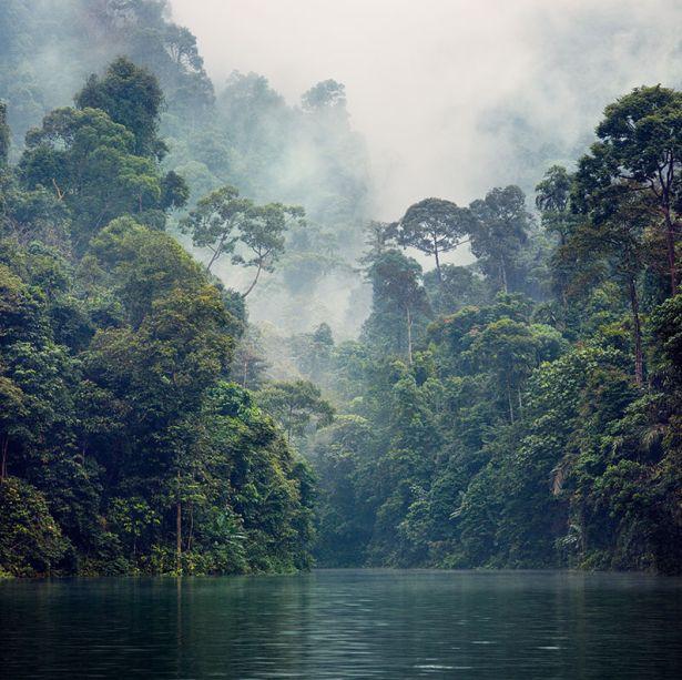 Deep vegetation #Malaysia