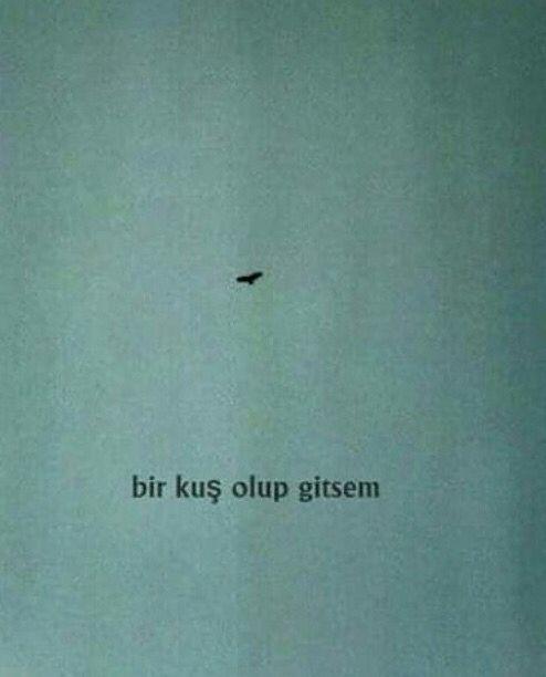 Bir kuş olup gitsem...hiç kimse bulamasa beni...hiç... /t.siyah//