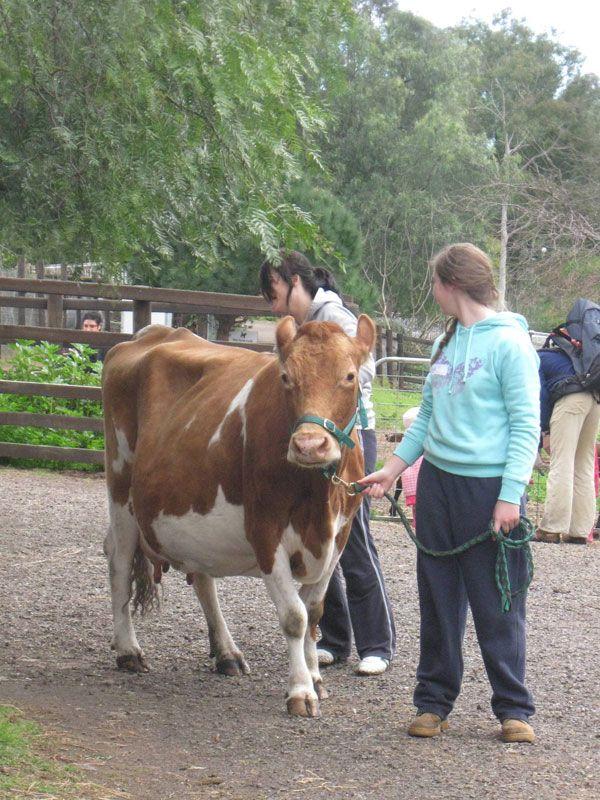 Collingwood Children's Farm » Get Involved