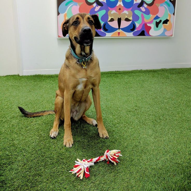 Say hi to Tiff! Spoil your dog too with fun toys from #TheRejectShop, they will love you even more! #getsavvy #savvypets #bargain #savvyshopper #dogsintheoffice #pettoys