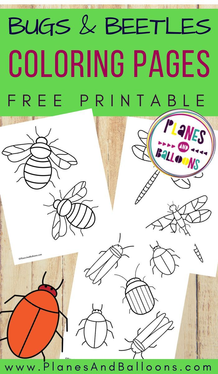 Bugs And Beetles Coloring Pages Insect Coloring Pages Bug Coloring Pages Free Coloring Pages