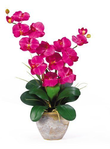 Nearly Natural 1026-BU Double Phalaenopsis Silk Orchid Flower Arrangement, Beauty (810709003611) Features two amazing stems with 6 flowers each Lush green leaves anchor this piece Shows natural looking exposed roots Pot Size 7w x 5.5h