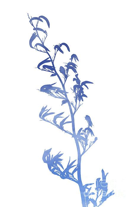 New Zealand native flax plant or harakeke in silhouette filled with sky