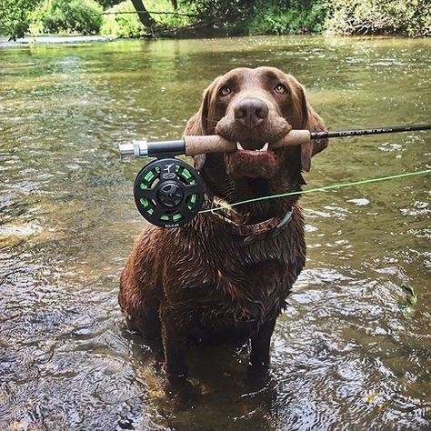Gone fishing!  #findingNemo #gonefishing #Saturday  Thank you for sharing…