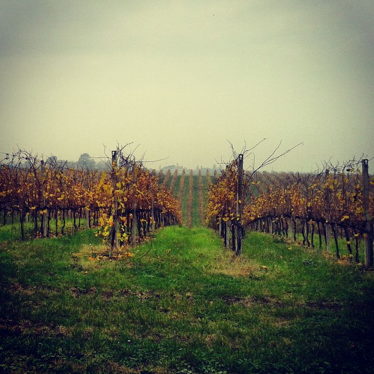 Our vineyards in November #fall #autumn #november #rest