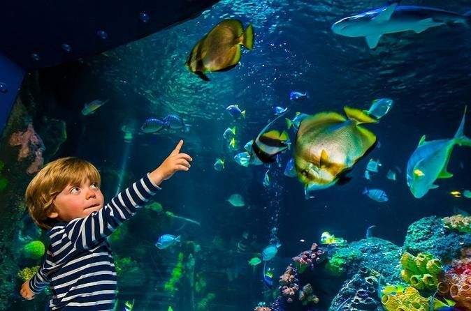 SEA LIFE Helsinki Entrance Ticket Dive into underwater adventure at SEA LIFE Helsinki! Your basic entrance ticket includes the entrance to the centre, transporting you into the amazing underwater world. With your ticket you can explore SEA LIFE with your own pace and participate on free fish feedings throughout the day. Be wowed by beautiful and fascinating creatures of the deep sea and prepare for astonishingly close views.Come and see SEA LIFE Helsinki aquarium located near ...