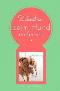 Zahnstein beim Hund entfernen ohne Tierarzt http://hundezeitung.info