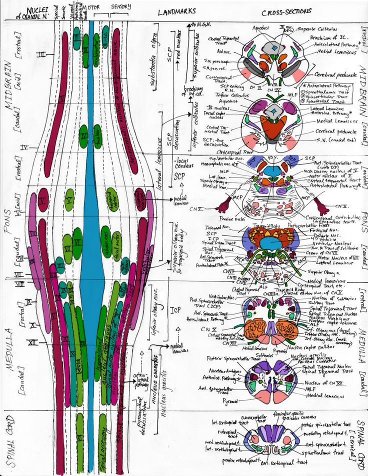 308 best Control Systems images on Pinterest | Neuroscience, The ...