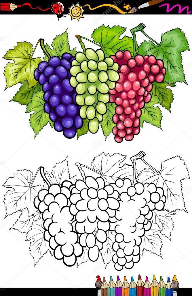 8 Dibujos De Uva Para Ninos Uva Dibujo Libro De Colores