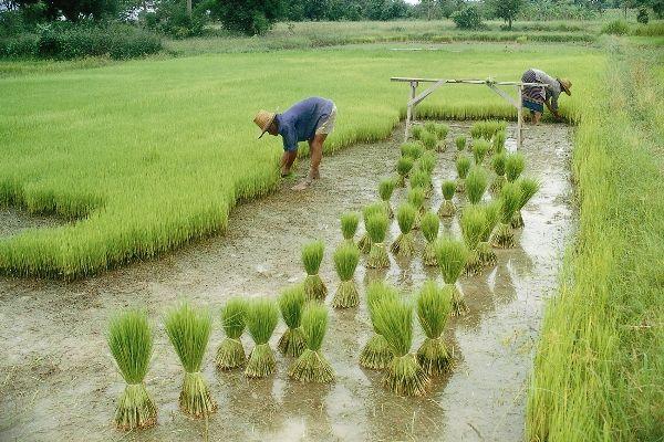 Mizoram launches new policy to boost agri-based economy   http://www.bizbilla.com/hotnews/Mizoram-launches-new-policy-to-boost-agri-based-economy-4933.html