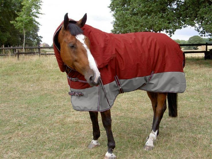 Gee Tac 420grm W 4e2d61ce0cbeb Jpg Lovely Generous Rug For The Price 68