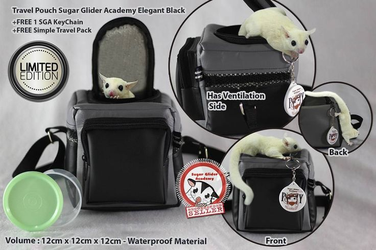 "Sugar Glider Academy Travel Pouch DSLR Elegant Black . ""How to bring the glider food?"" ""We got this cool Travel Pouch but where do we buy the food?"" . Have you got that kind of question while bought a new bag for your glider? Don't worry! . This Sugar Glider Academy Travel Pouch has Simple Travel Pack as a bonus suitable for this Travel Pouch front pocket size. Exciting isn't? You don't have to worry again to search for the best-fit container for this Travel Pouch! We will give you free as…"