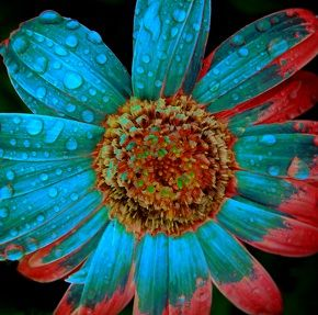 rainforest flowers - Google Search