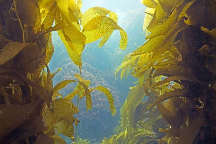 Les 25 meilleures id es de la cat gorie algue sur for Algues rouges piscine