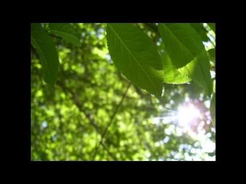 Antonio L. Vivaldi - The Four Seasons (Full - Live) - YouTube