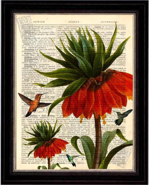 Hummingbird with red flowers  Print on Upcycled 1896 Latin English Dictionary Page