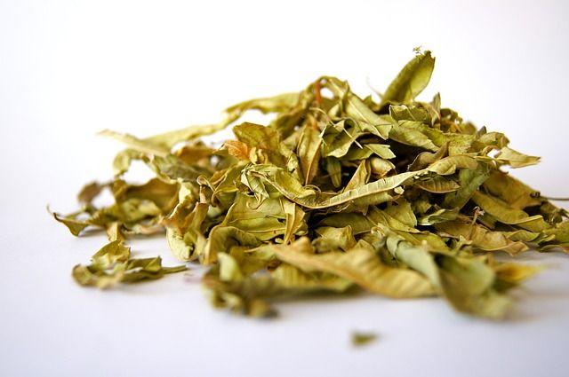 Fez uma horta de ervas para chá em casa, mas não sabe como secar as folhas para usar no preparo? Aprenda métodos de secagem para ervas de chá.
