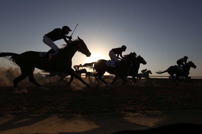 فوائد ركوب الخيل الجسدية والعقلية والعاطفية Arabian Horse Horses Arabians