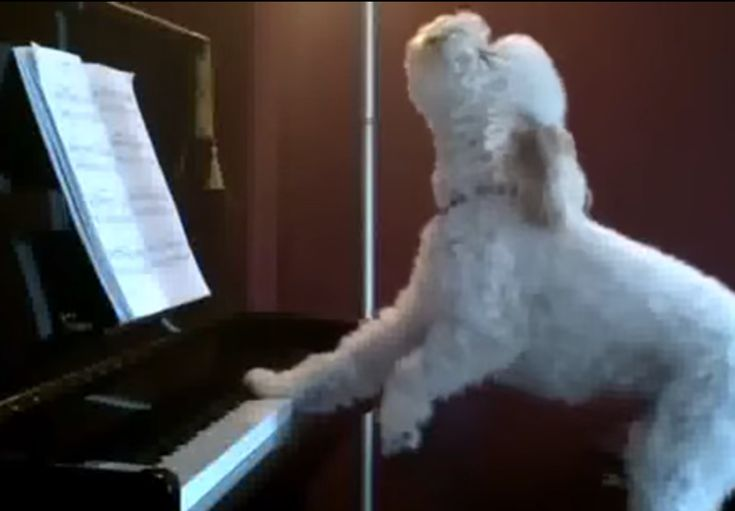 5 Videos of Animals Playing Music That Will Make You Smile All Day