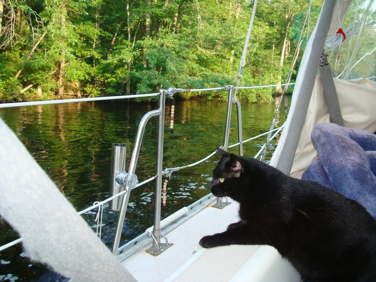 17 Best Images About Sailing Quotes On Pinterest: 17 Best Images About = ^.^= Cats & Boats = ^.^= On Pinterest