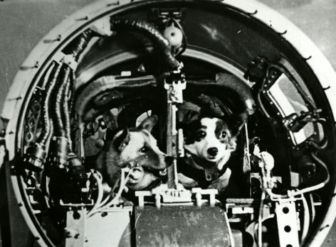 Before Yuri Gagarin became the first human in outer space, numerous animals gave their lives for science in the often cruel and stressful tests of space flight. The first creatures to survive a 24 hour ordeal orbiting earth in a space craft were two spirited dogs named Belka and Strelka.  All of the Soviet space dogs, including Belka and Strelka, were strays rounded up from the streets and put under various stress tests to see which were suitable for flight. It also helped to be cute and…