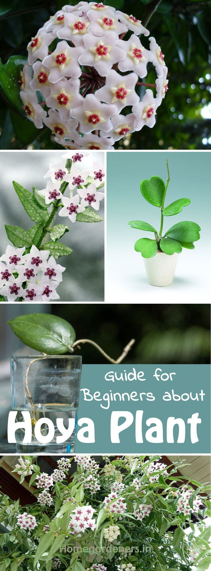 7893 best container gardening images on pinterest plants for Best no maintenance plants
