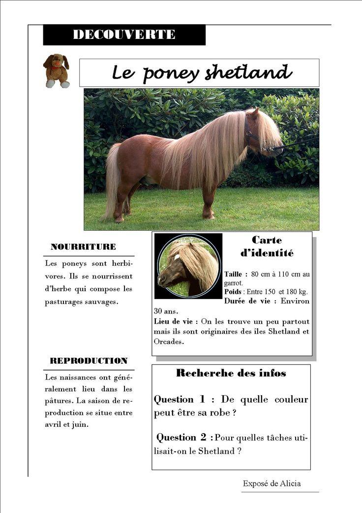 Bien-aimé Les 118 meilleures images du tableau Fiches poneys sur Pinterest  RY47