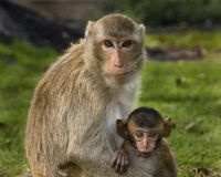 Tell Israel to outlaw monkey breeding farms! Most of the 1,500 monkeys will be sold to labs for painful toxicology experiments!