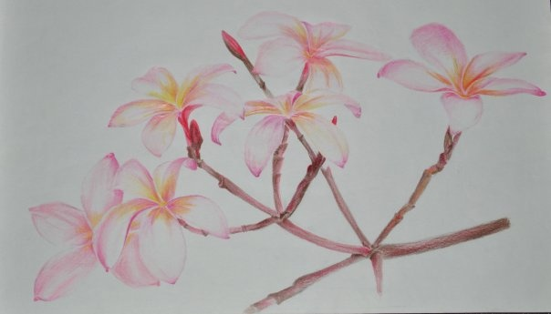 flowers (material: color pencil)