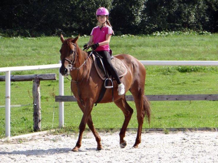 Wakacyjny koń