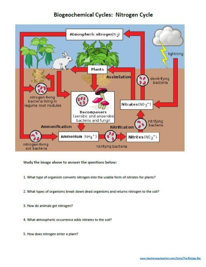 Pin On Food Web Worksheet