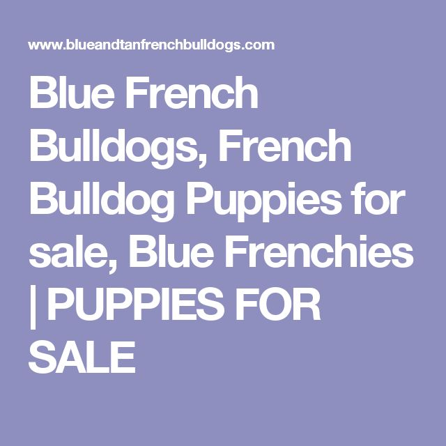 The  Best Frenchie Puppies For Sale Ideas On   Mini