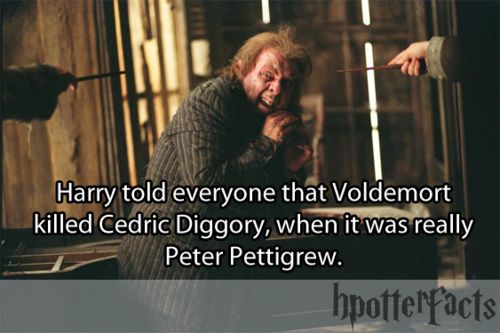 yepSolemnly Swear, Harrypotter, Hpotter Facts, Expecto Patronum, Hpfacts, Hp Facts, Harry Potter Facts, Hpotterfacts, Random Facts