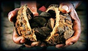 pastai de nuci de Brazilia