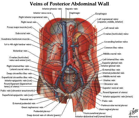 289 best images about Anatomy. Physiology. on Pinterest ...
