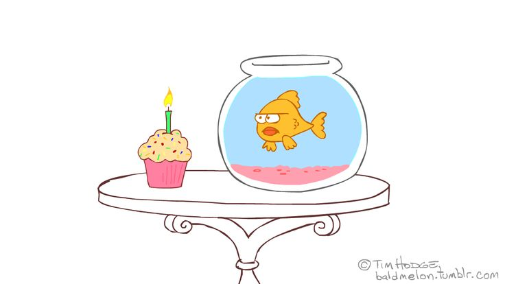funny happy birthday gif - Pesquisa Google
