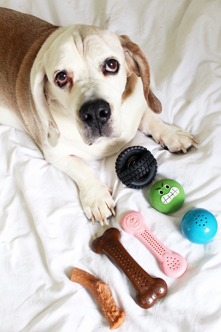Product Review: PetQwerks Toys and Chews – Stylish Paws