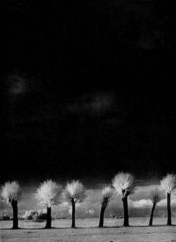 Trufula trees  ;-) a la edward hartwig