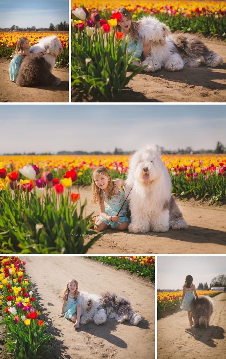 Portland Family Photographer, Wooden Shoe Tulip, Old English Sheepdog, Shannon Hager Photography