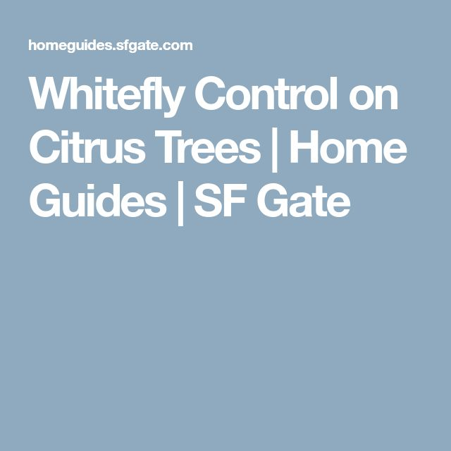 Whitefly Control on Citrus Trees | Home Guides | SF Gate