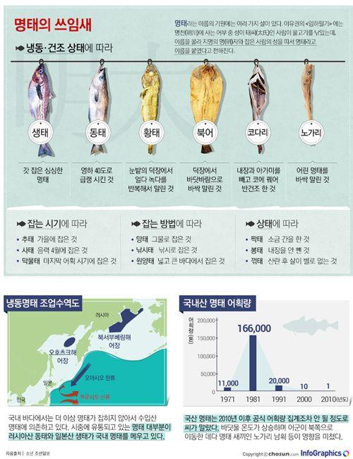 [infographics]  황태, 북어, 코다리… 명태의 '맛있는 변신'