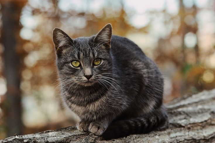 A feral cat needs help, what do you do? Fetch! Pet Care offers 5 ways to care for feral cats while working to reduce their numbers in your neighborhood.