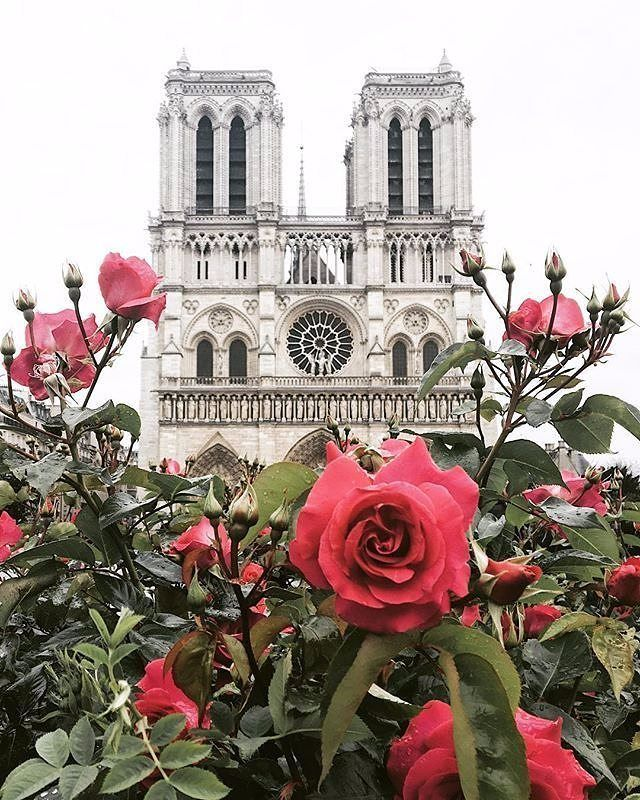 """1,337 Likes, 10 Comments - PARISCityVISION (@pariscityvision) on Instagram: """"Follow @herve_in_paris ✨  Nice picture of Notre Dame  by aggiewo  Thank you for sharing!  If you…"""""""