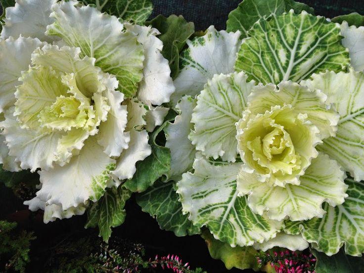 http://unquadratodigiardino.it/fiere-eventi-mostre-mercato/mappa-delle-fiere/dettaglievento/9/-/piante-autunnali-da-giardino-sempreverdi-e-piante-con-bacche.html