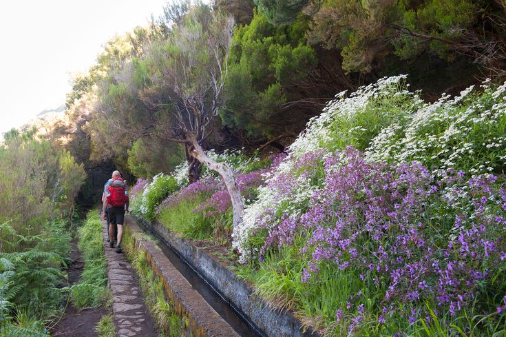 Again we need to follow the levada. This time to reach 25 Fontes. Hiking along the levada with many flowers. Great nature of Madeira - Portugal
